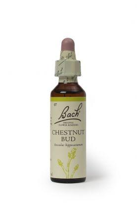 Bach Chestnut Bud (Hestekastanjeknopp)